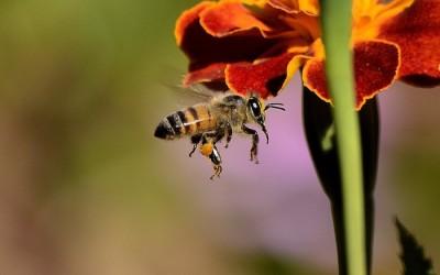 Jak owady inspirują naukowców